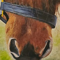 close up of horse's nose